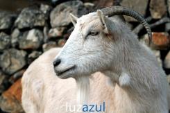 Mas de Madalena_2011_Luzazul