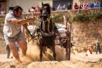 Competición de tiro y Arrastre en les Festes de Sant Vicent de la Vall d'Uixó 2014. Foto Raúl Rubio (luzazul estudio)